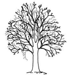 GSH-Tree-Surgery-East-Sussex-Kent-Crown-thinning.jpg