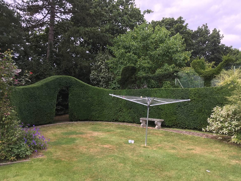 GSH-Tree-Surgery-East-Sussex-Kent-Hedge-Cuttin-1.jpg