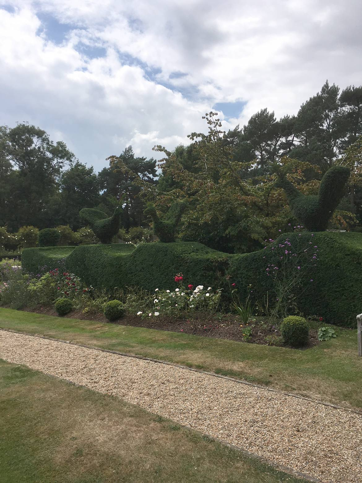 GSH-Tree-Surgery-East-Sussex-Kent-Hedge-Cuttin-2.jpg